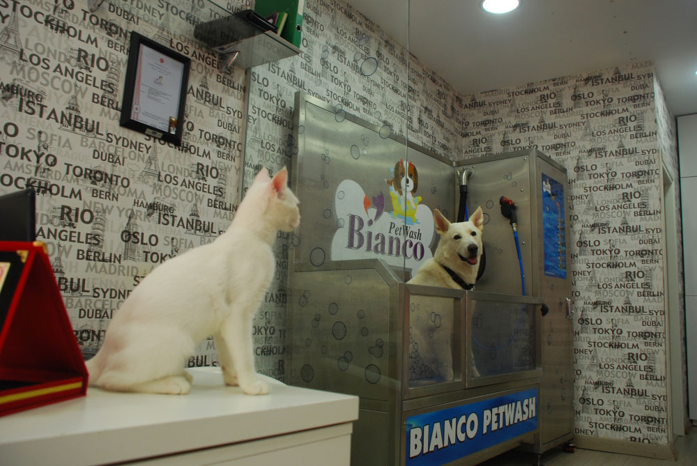 Dogwash dans un espace canin