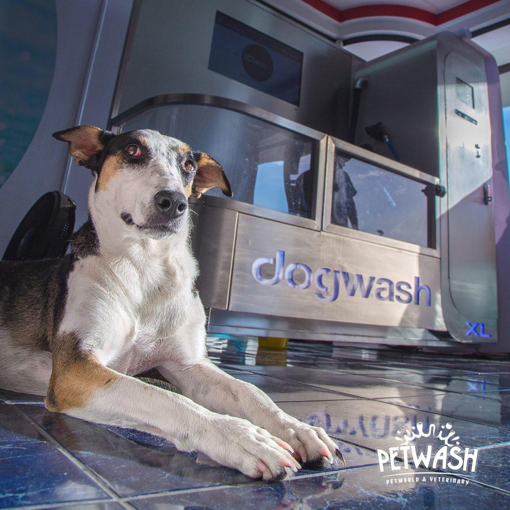 chien-et-dogwash