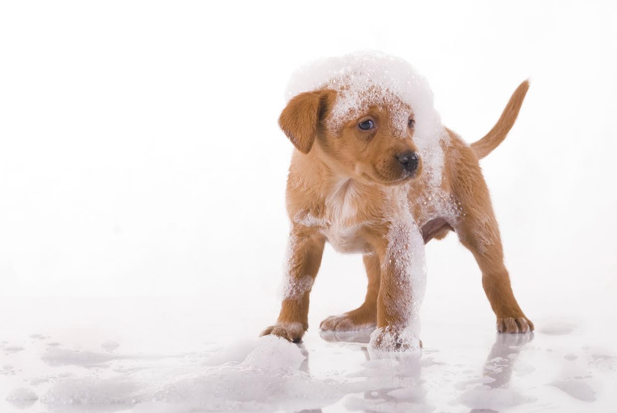 Lavage d'un chien Dogwash