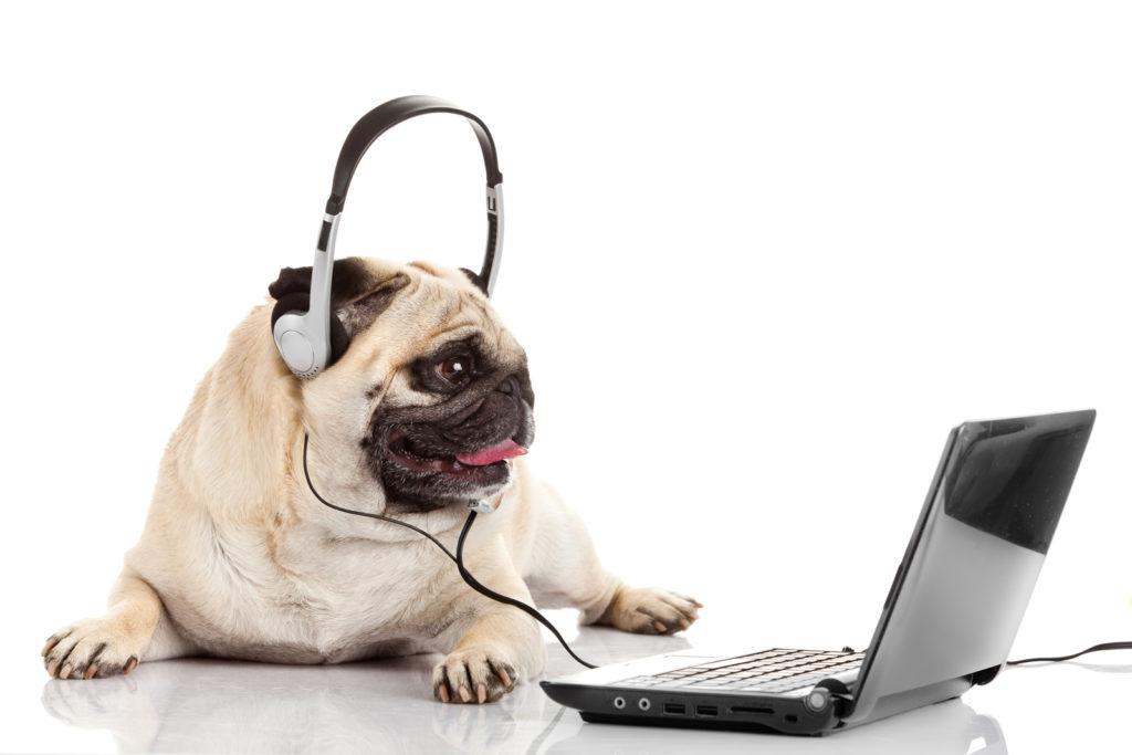 Chien au téléphone - Dogwash France