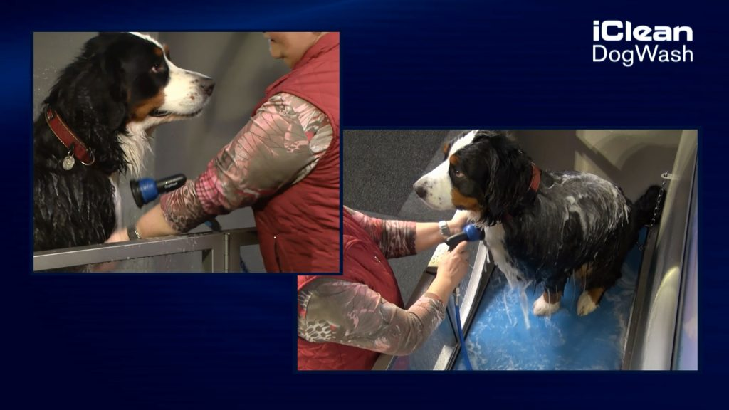 Station de lavage canin avec chien