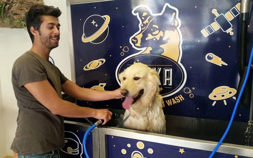 Lavage d'un chien dans un Dogwash