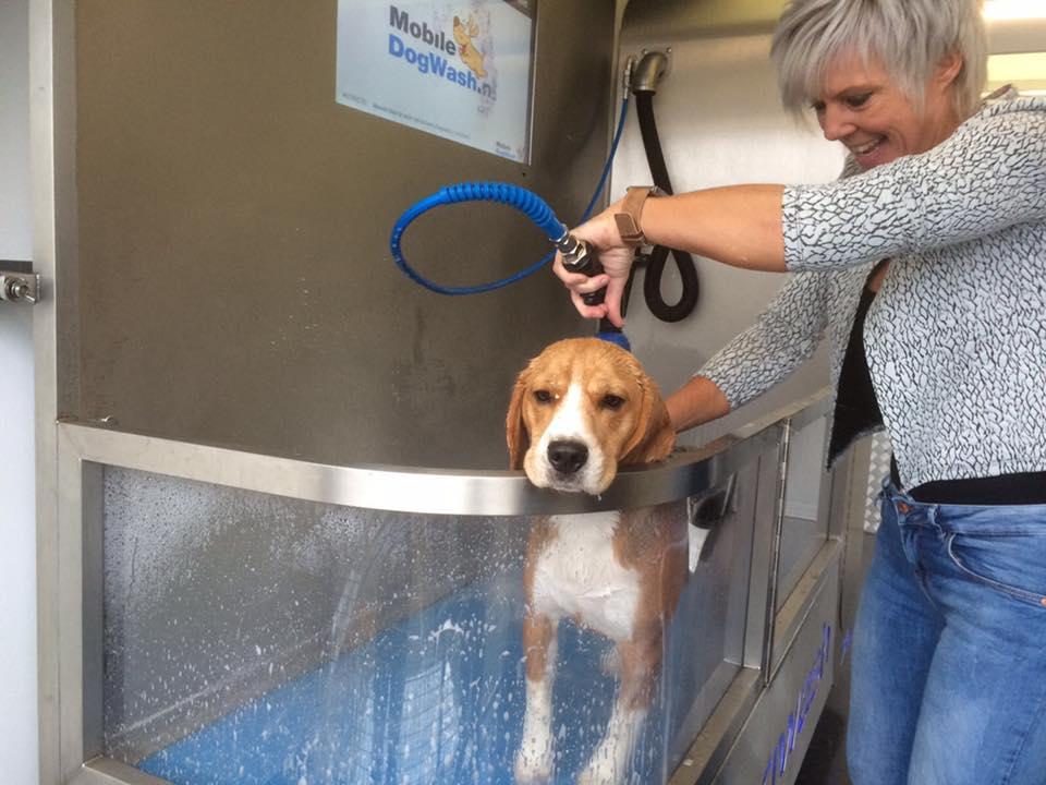chien-dans-un-dogwash