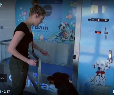 Video Dogwash Cani-bain