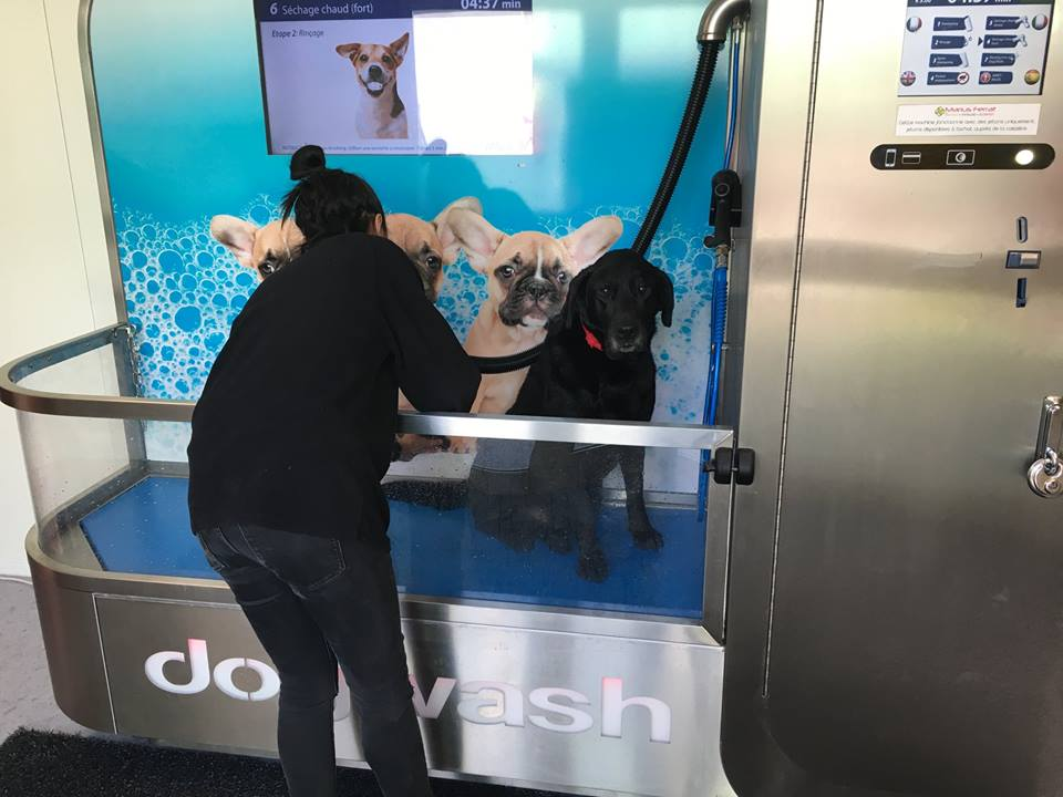 Lavage canin Marseille