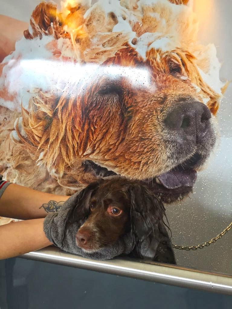 chien-dogwash-barcelone