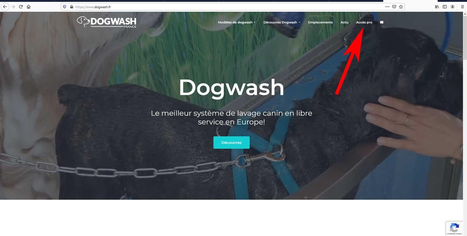 Boutique en ligne dogwash