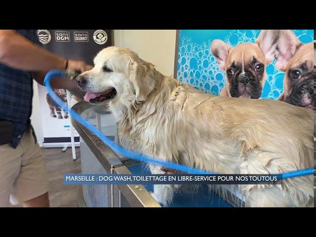 marseille-dog-wash-un-espace-de-toilettage-libre-pour-nos-toutous-dY1vljSZLB4sddefault